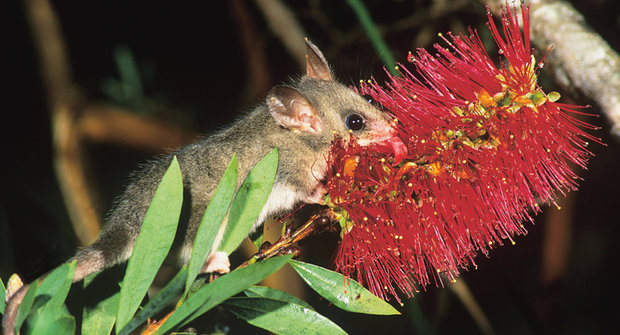 Obratlovci na květech: Kam hmyz nedosáhne