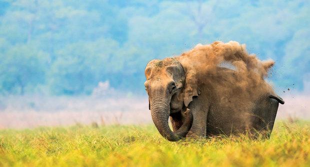 Foto ABC: UV faktor pro slona