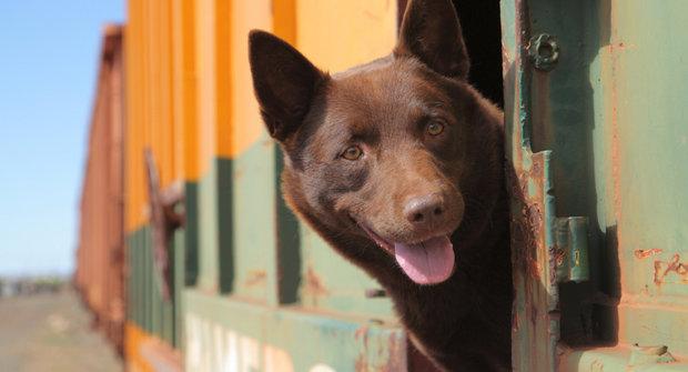 Pes je přítel člověka: Slavní psí filmoví tuláci