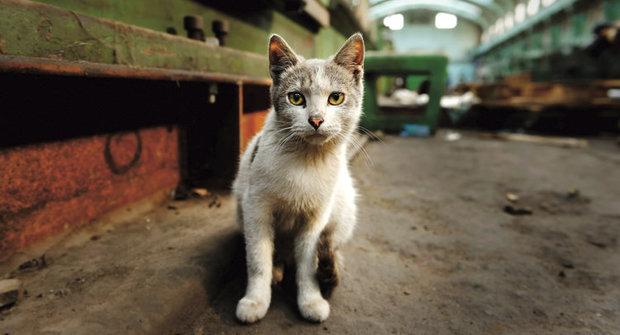 Nečekaný vítěz: Kočka potkana neuloví