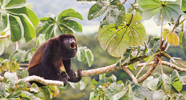 Obarvené opice: Z černých na žluté
