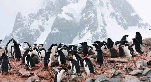 Tajemství Antarktidy: Nedotčený život ve vnitrozemí