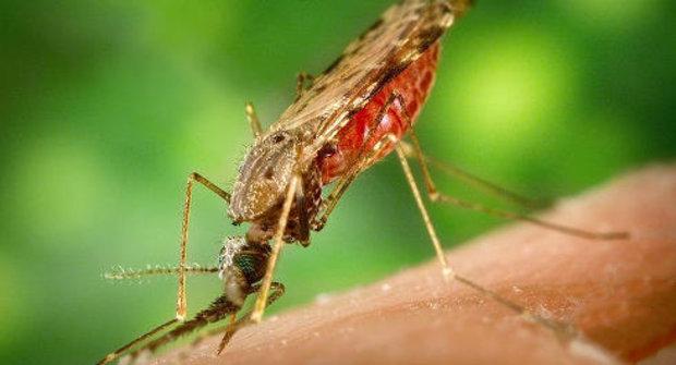 Před malárií ochrání smradlavé fusakle