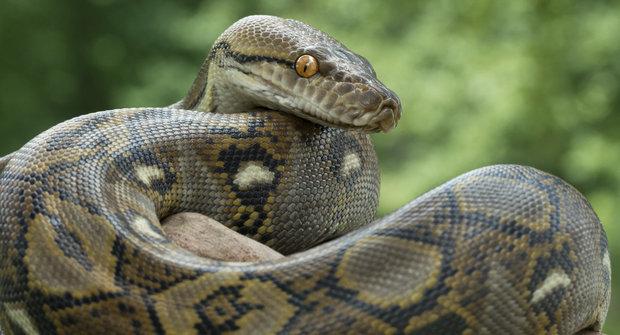 Superschopnosti zvířat: Hadi s termokamerou