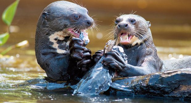 Mizející megafauna: Přežijí sladkovodní obratlovci?