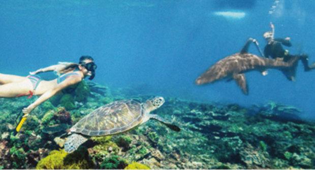 Odpuzovač žraloků: Nová technologie zachrání rybáře, potápěče i surfaře