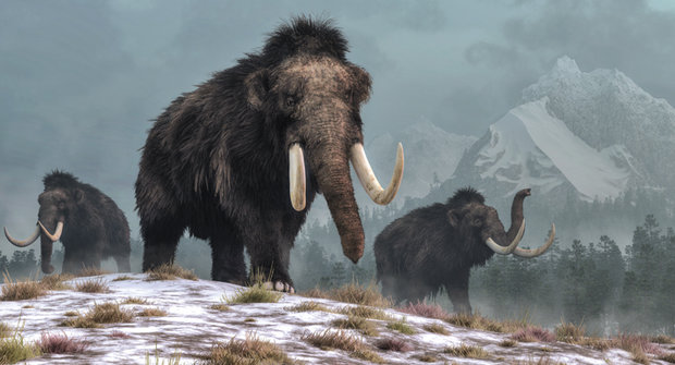 Poslední mamuti vyhynuli, až když v Egyptě stály pyramidy