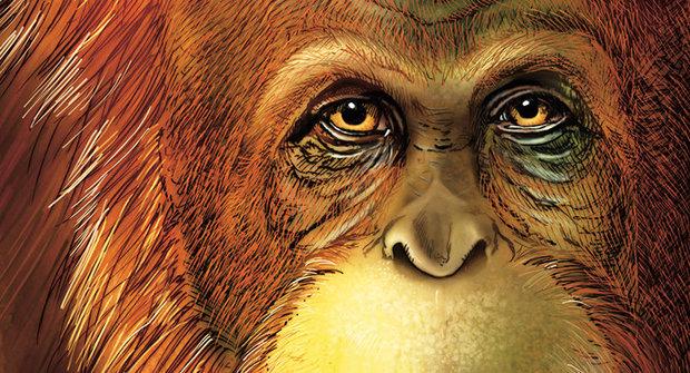 Přerostlá gorila, orangutan, nebo dokonce pračlověk? Největší a nejtajemnější lidoop