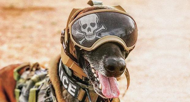 Pes v armádě: Jaké jsou nejmodernější technologie pro válečné psy?