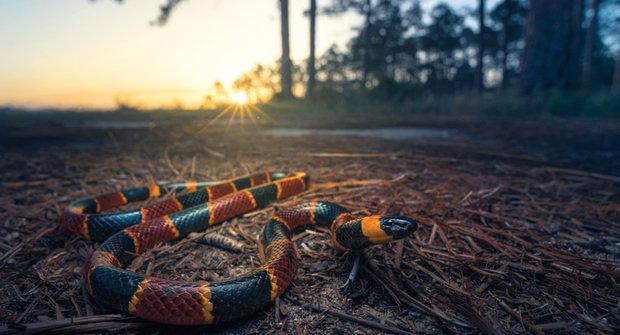 Pozor na hadí jedy! Proč vznikly jedové zuby?
