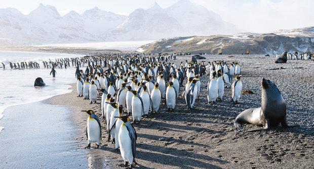 Tučňáci na ostrově rajského plynu pobláznili vědce... doslova!