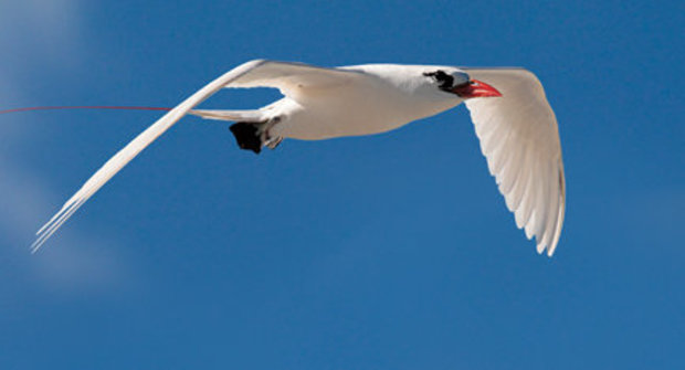 Zázračná ptačí křídla: Co z nich vyčetli vědci