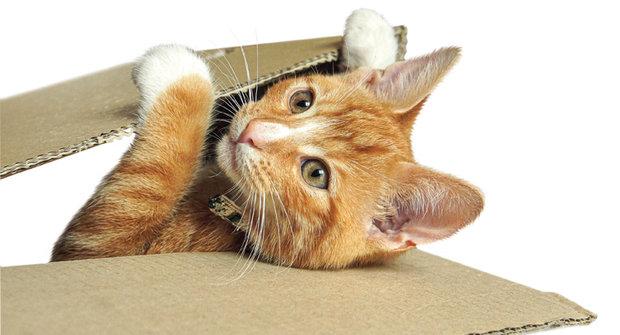 Kočka na Hedvábné stezce: Nečekaný objev jednoho mazlíčka