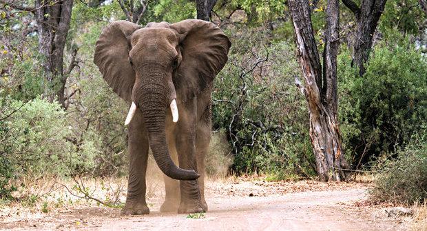 Pojistka proti vymírání druhů: Zvířecí ekosystémoví inženýři