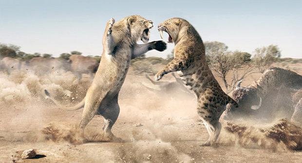 Lví osudy: Minulost a budoucnost krále zvířat