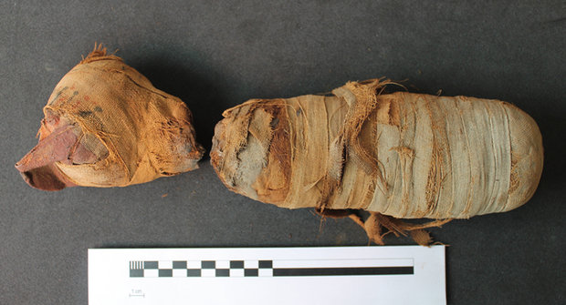Digitální pitva: Virtuální zkoumání zvířecích mumií