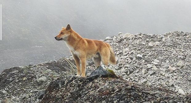 Zpívající pes: Ztracený a znovu nalezený
