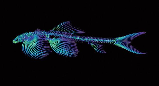 Rybí horolezci: Jak se z ploutví stanou nohy