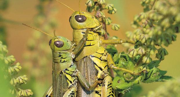 Spolupráce ve světě rostlin: Větší pomáhají přežít menším