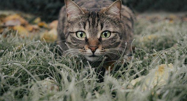 Smysluplné šelmy: Malé kočky jsou dokonalý výtvor přírody