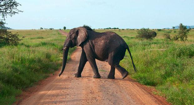 Sloni se schovávají v lese