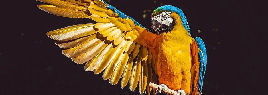 Krása velkých papoušků ara