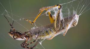 Vynálezy přírody: V pavoučích sítích
