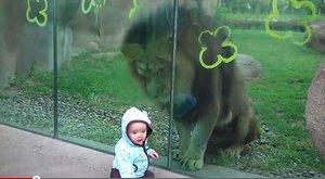Podívej, lev ti chce sežrat bratříčka, to je ale legrace!