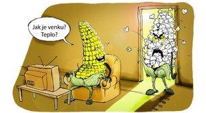 Džouk týdne: Co dělá kukuřice, když je vedro? Puká zlostí