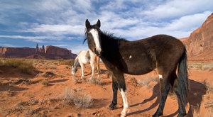 Dějiny psané kopytem: Kde se vzal kůň?
