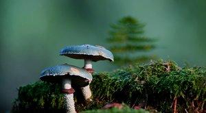 """Pohled do světa: Houby nejsou """"na houby"""""""