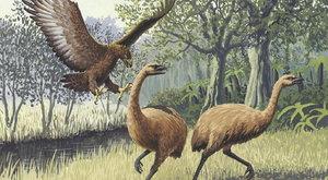 Příběhy vyhynulých zvířat: Ptáci moa