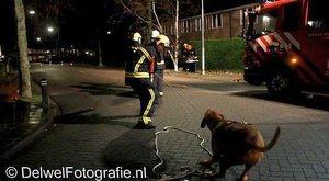 Dobrovolný psí hasič v akci