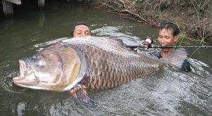 Fantastická příroda: Monstra z řeky
