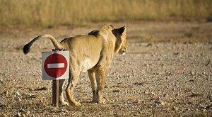 Zvířata a značky: Čtyři kola vs. čtyři nohy
