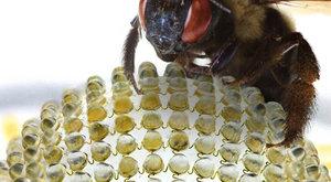Foťte jako včela!