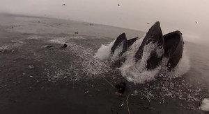 Snídaně obrů 2: Potápěči (málem) spolknutí velrybami!