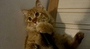 Kočka už si zase dává fičák