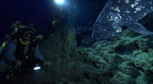 Neznámé latimérie: Vzácný pozdrav z hlubin