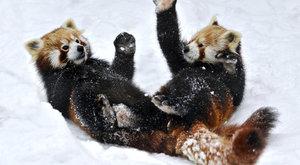 Kung Fu Panda praktikuje to, co jí jde nejlíp