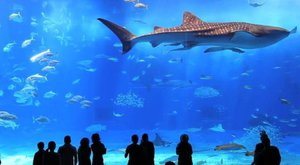V druhém největším akváriu na světě bydlí žralok velrybí