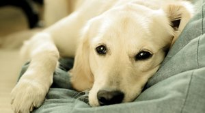 6 důvodů, proč jsou majitelé psů zdravější!