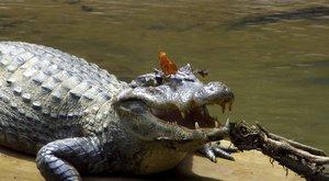 Na zdraví! Pijáci krokodýlích slz