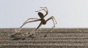 Pavouci v přemetech: Že je to teda baví!