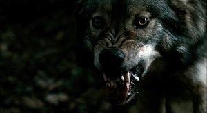 Nemrtvé prázdniny III: Opravdoví vlkodlaci