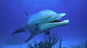 Slyší neslyšitelné - Zvířata používají sonary