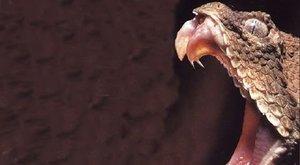 Skutečný hrůzný mutant? Jedovatý had s pavoukem na ocasu