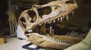 První dinosaurus ve vesmíru: Vyletěla si fosílie Rexe