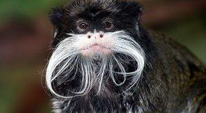 Chytré a roztomilé opice: Co se od nich můžeme učit?