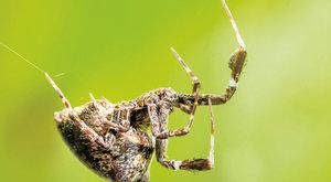 Pavouk elektrikářem: Unikátní sítě na lov hmyzu